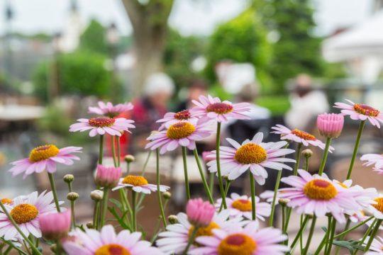 Bunte Blumen auf der großen Außenterrasse