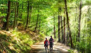 Wanderndes Paar im Wald auf dem Eifelsteig